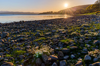 Sunset on scurvy grass, Beauly Firth